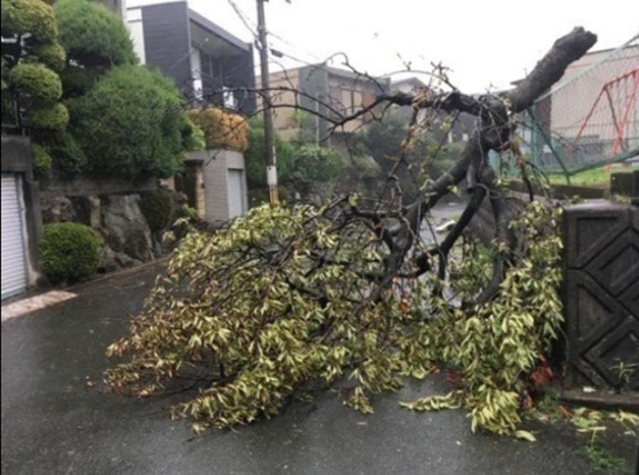 台風被害の状況